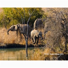 South African By Donny   Wall Calendar 11  X 8 5  (12 Months)   Ki5ro28ultrr   Www Artscow Com Month