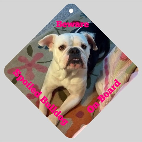 Spoiled Bulldog By Hannah Hudson   Car Window Sign   5sxm2g2wfvfr   Www Artscow Com Front