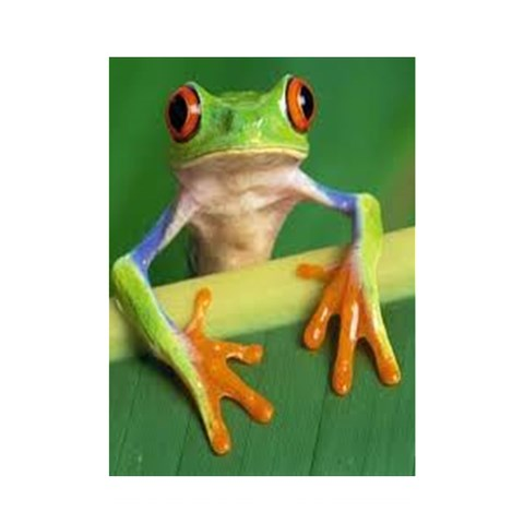 Frog Curtain By Beth Turner   Shower Curtain 48  X 72  (small)   Rgycnd5z8h54   Www Artscow Com 42.18 x64.8 Curtain