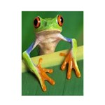 frog curtain - Shower Curtain 48  x 72  (Small)