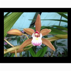 206  Noelas Orchid Calendars By Danielle Willis   Wall Calendar 11  X 8 5  (12 Months)   Mz0f9vbavpmj   Www Artscow Com Month