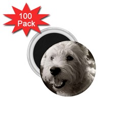 Westie Puppy 100 Pack Small Magnet (round)
