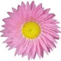 jthompson_easter_flower