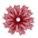 BOS FS flower08