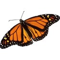 DZ_YIP_June_butterfly1