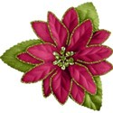 cc-CC-Poinsettia