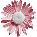 bos_doi_flower06