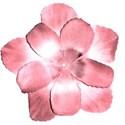 jeanine-blossom2-ajs