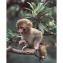 monkey cutee