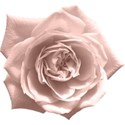 moo_bouquetoffriends_rose
