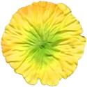 floweryellow