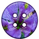 jThompson_iris_button2