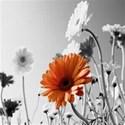 Flower Paper Set #1 -02
