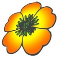 my_scew_buttercup_flower