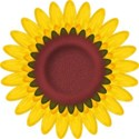 BOS SH sunflower02