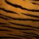 BIG Tigre