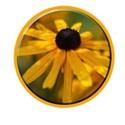 flowerbutton