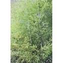 bamboopencil