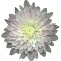 Flower Mania Set - 11