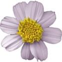 Flower Mania Set - 15