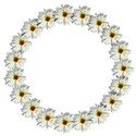 lazy daisy circle