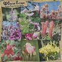 Floral Paper Park
