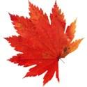 leaf 40