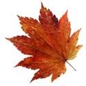 leaf 46