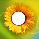 sunflower-wallpaper_1