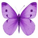 butterfly purple 2