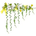 apple blossom branch dangles yellow