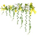 apple blossom branch dangles yellow 2
