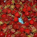 strawberrybackgrnd1