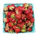 bucketstrawberries2