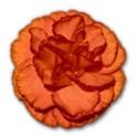 SChua_FloralSwatches_flower copy