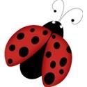 bos_sb_ladybug01