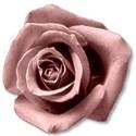 roselightpink