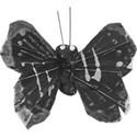 butterfly_volley_mikki copy