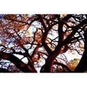 TreeSeries2