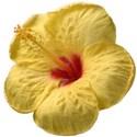 IMG_3888 hibiscus2