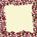 torn roses framed background paper