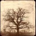 generation blank tree