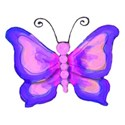 6 blue and pink butterfly