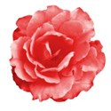 rosey red 02 DS - Copy