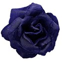 dark blue denim rose
