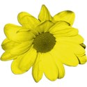 YellowFlower_2