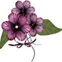 PurpleCluster_1