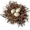 nest eggs 01