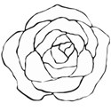 hand drawn rose line art