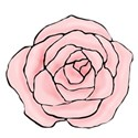 hand drawn pink rose